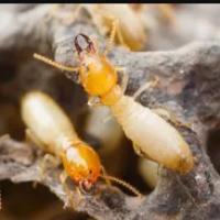 Bose Pest Control