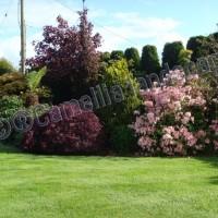 Camellia Landscapes