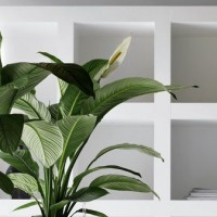Universal Floral Office Plants Rental & Plants Maintenance Service UK Ireland