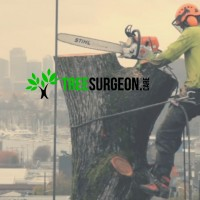 Tree Surgeon Dublin