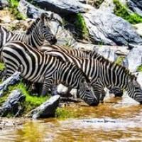 Sardius  Safaris Kenya