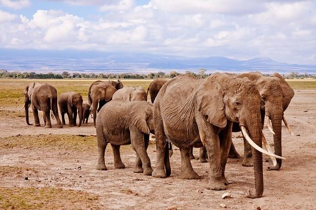 Kenya Travel Agency