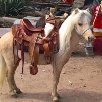 Ponies de Aguascalientes