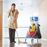Carpet Cleaning Wellington