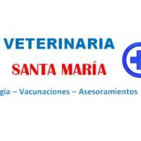 Santa María, Veterinaria