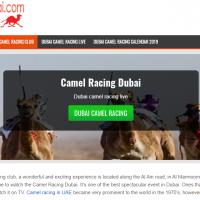 Dubai camel racing