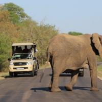 Kruger Park Trips
