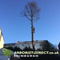 Arborist Direct Aberdeen