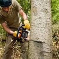 Riverside Tree Service