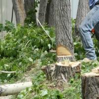 Tree Care Honolulu