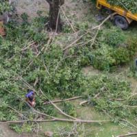 Tree Service West Palm Beach