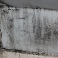 ALL US Mold Removal & Remediation - Brooklyn NY