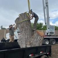 Utah Tree Works