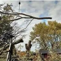 Fullerton Tree Experts