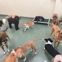 PUPS Pet Club