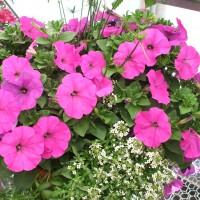 Carousel Floral Gift & Garden