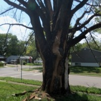 Tree Trimming Evansville