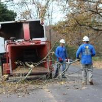 E&L Tree Experts LLC