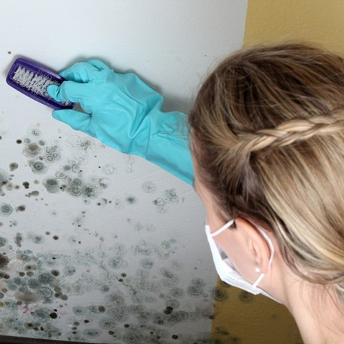 safe mold solutions effective mold removal The mold removal page also provides a step by step guide to the entire mold removal process the mold on clothes page has information about removing mold from clothes with bleach and other mold killing solutions chlorine bleach information bleach is probably the most well known mold killer in fact many commercial mold killing.