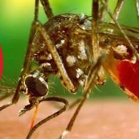 Mosquito Shield of Baton Rouge