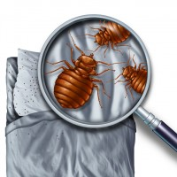 A Plus Pest Control of Los Angeles