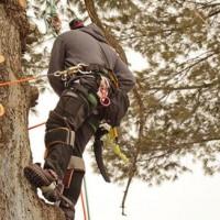 M & M Tree Experts Inc.