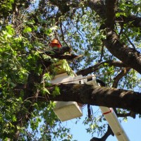 MQ Landscaping & Tree Services