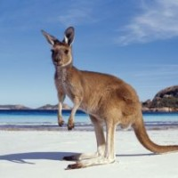 Discover Downunder
