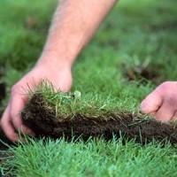 Gabino Landscaping