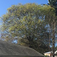 On Demand Tree Service