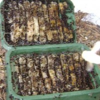 Bee Master of Las Vegas, Inc.