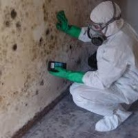 Catstrong Mold Inspection of Pearland