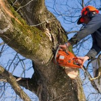 Fort Myers Tree Service