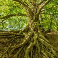 Tree Service Pros Concord