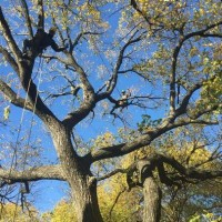 Tree Service Pros of Huntington Beach