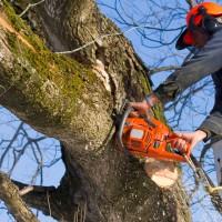 Rockford Tree Service Pros