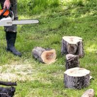 Pueblo Tree Pros
