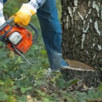 Tree Care Lauderdale