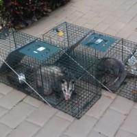 Davenport Wildlife Removal
