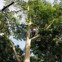 Diversified Tree Company