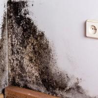Water Mold Fire Restoration of Charleston