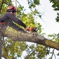 Durham Tree Service Pros
