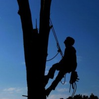 Chicago Tree Service