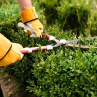 DTX Landscaping and Lawn Care