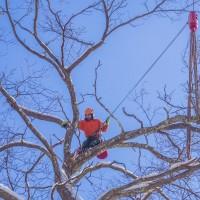 Top Tree Service Albuquerque