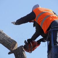 Tree Service Stamford