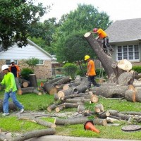 Tree Service Norfolk
