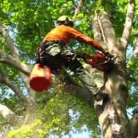 Bay Tree Removal Service