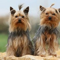 Central Park Puppies Inc