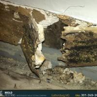 Mold Testing | Mold Testing Gaithersburg